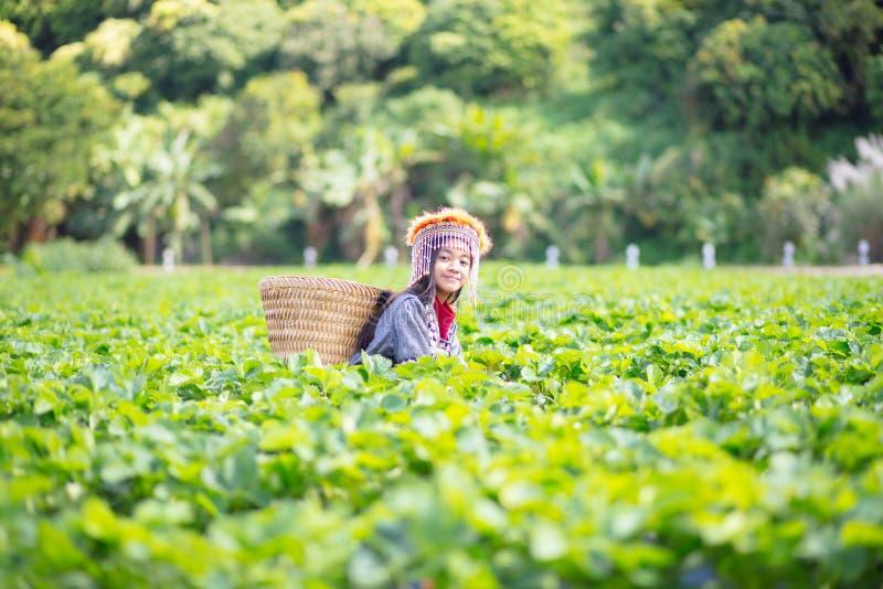 Strawberry field farm. Little hill tribe farmer at strawberry field farm royalty free stock image
