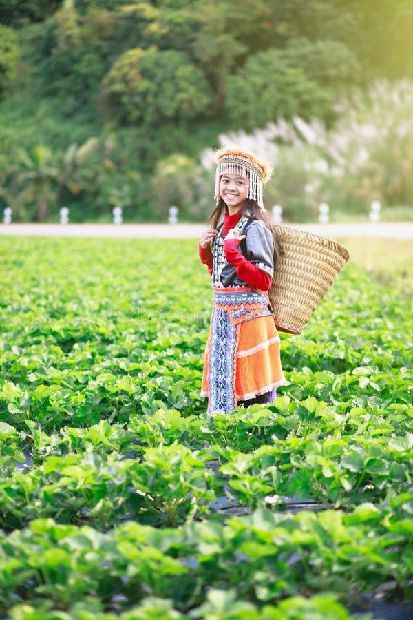 Strawberry field farm. Little hill tribe farmer at strawberry field farm royalty free stock photography