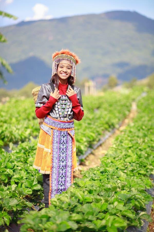 Strawberry field farm. Little hill tribe farmer standing at strawberry field farm stock image