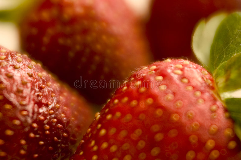 Strawberry fields royalty free stock images