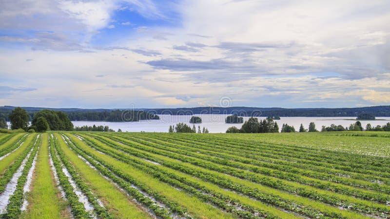 Strawberry Fields stock foto's