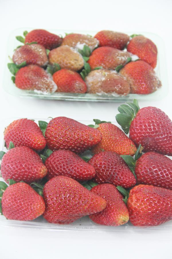 Strawberry food agriculture isolated mold delicious healthful fruit Sao Paulo Brazil stock photo