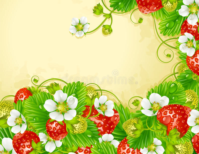 Strawberry Frame. Red Berry And White Flowe Royalty Free Stock Photo