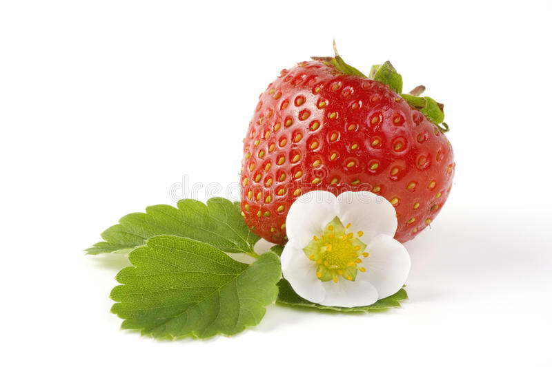 Strawberry fruit. Red strawberry fruit with green leaves isolated on white background stock images