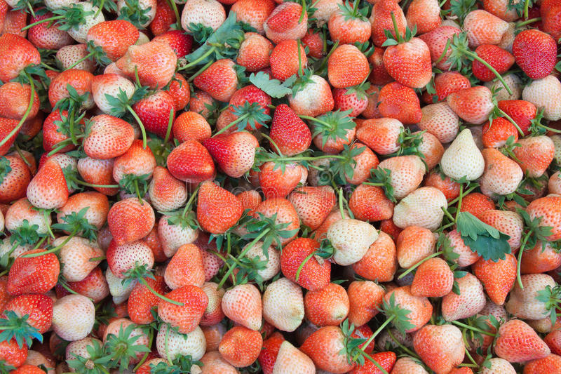 The strawberry fruit background in market. The strawberry fruit background in the market stock image