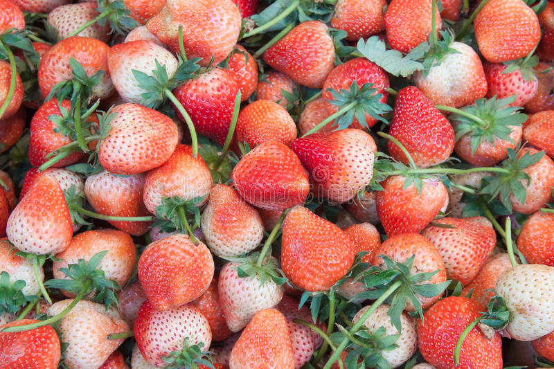 The strawberry fruit background in market. The strawberry fruit background in the market stock photo