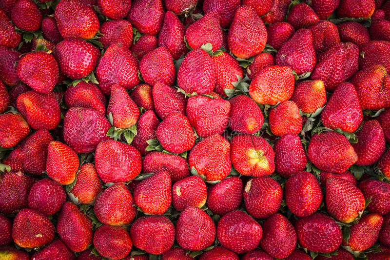 Strawberry fruit stock photography