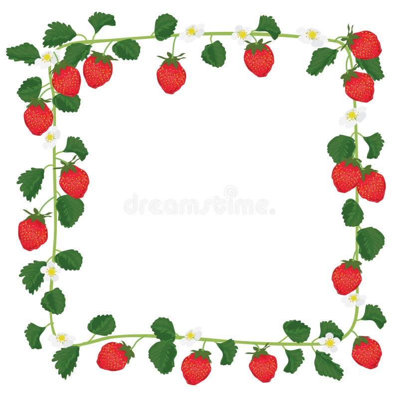 Strawberry fruit frame. Illustration square frame strawberry white background vector illustration