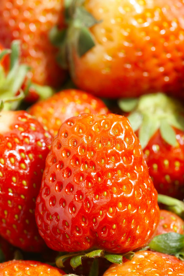 Download Strawberry fruits stock photo. Image of dessert, edible - 19087764