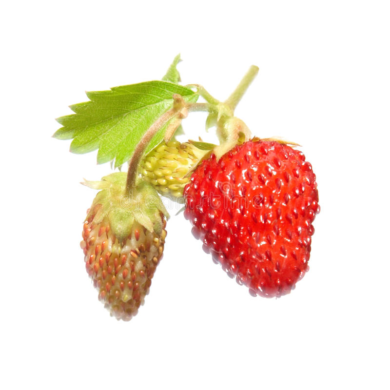 Strawberry with green leaf royalty free stock photos
