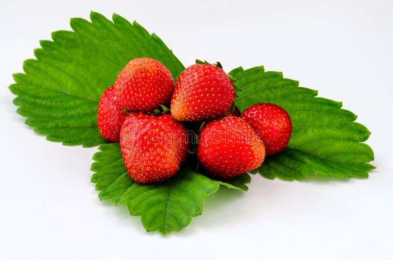Strawberry isolated leaf on the white background stock image