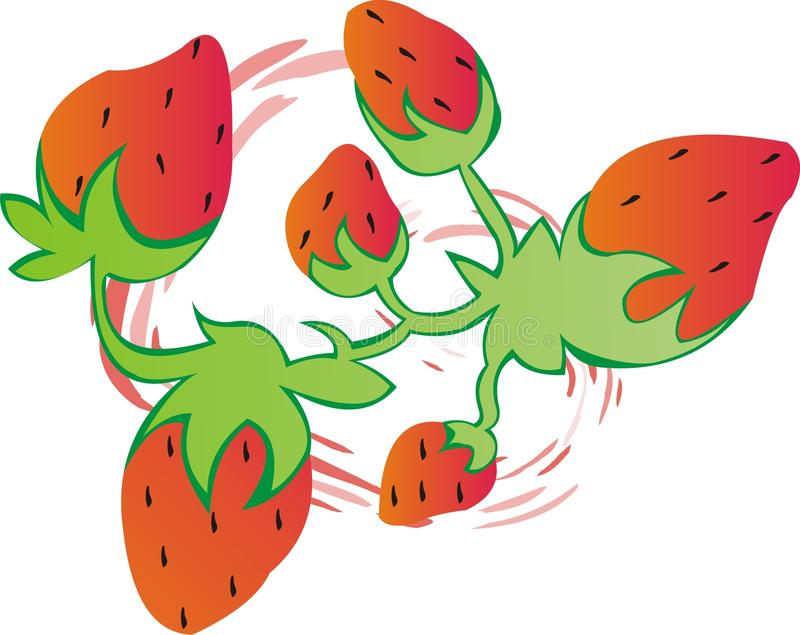 Strawberry Mix -Vector Image. A mixture of strawberries whirling around. Great for a fruit picture or menu or who knows what else someone may need this for vector illustration