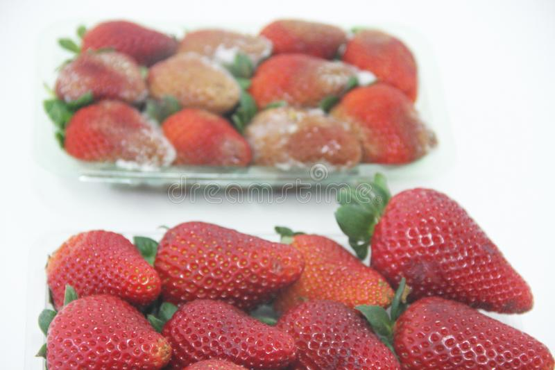 Strawberry food agriculture isolated mold delicious healthful fruit Sao Paulo Brazil royalty free stock image