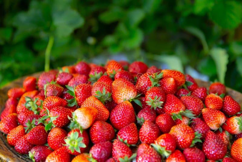 Strawberry most pesticide residue fruit danger stock photos