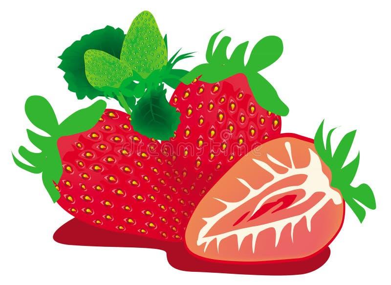 46-Strawberry-NK1 ilustração stock