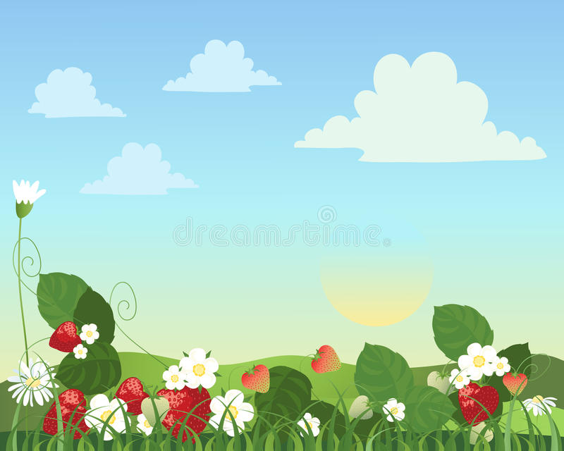 Strawberry patch. An illustration of a strawberry patch with fruit flowers and daisies with a summer landscape in the background vector illustration
