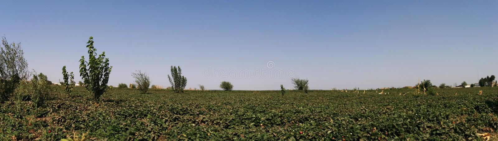 Download Strawberry plants stock image. Image of close, color - 43809569