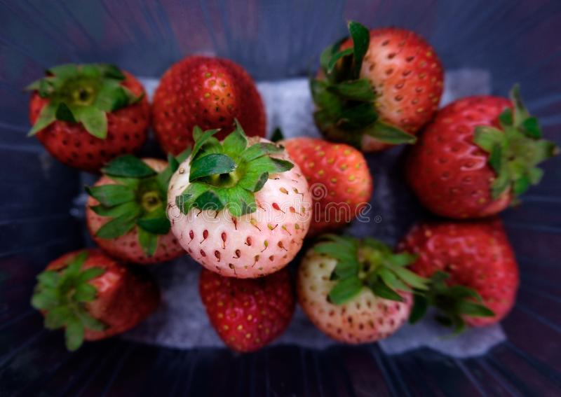Strawberry in plastic container stock image