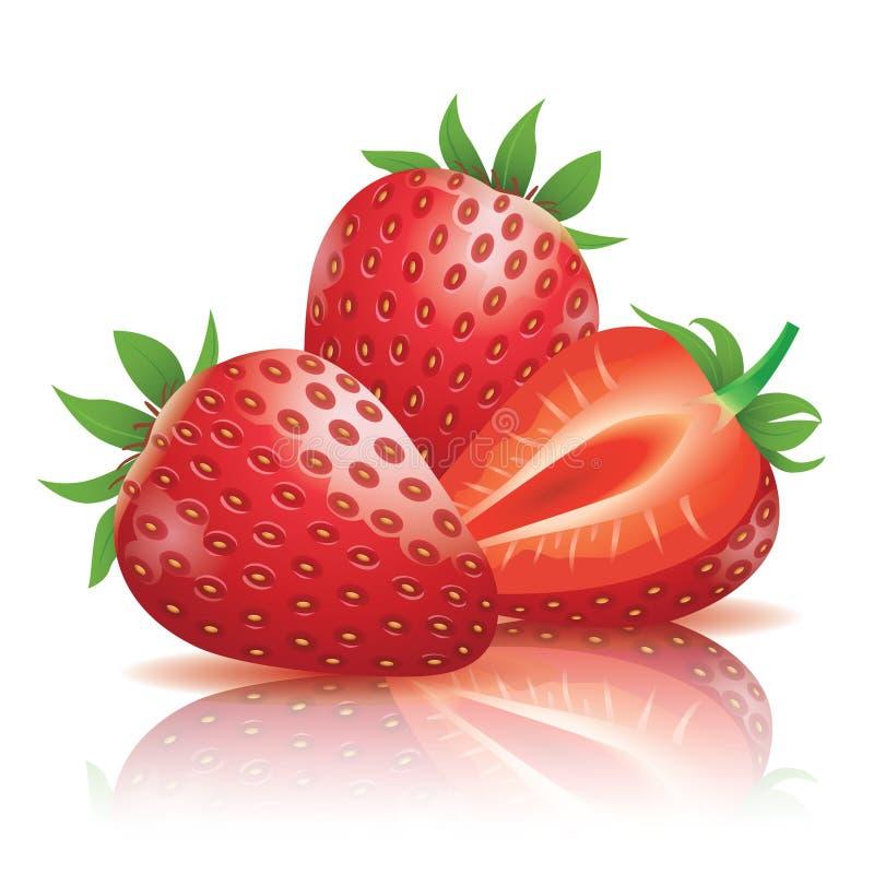 Strawberry. Realistic strawberry illustration on white background