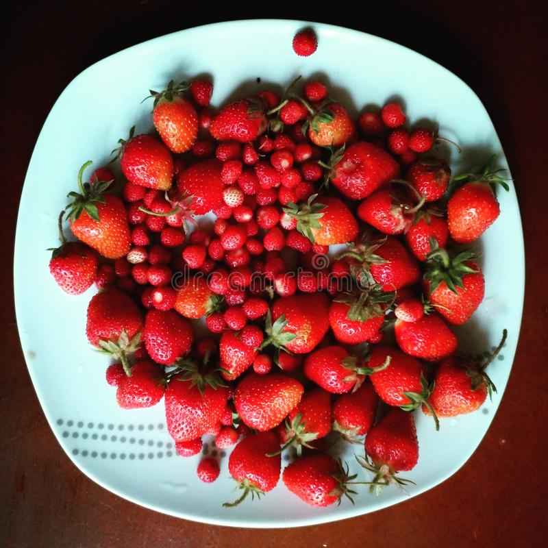 strawberry red cool stock photography