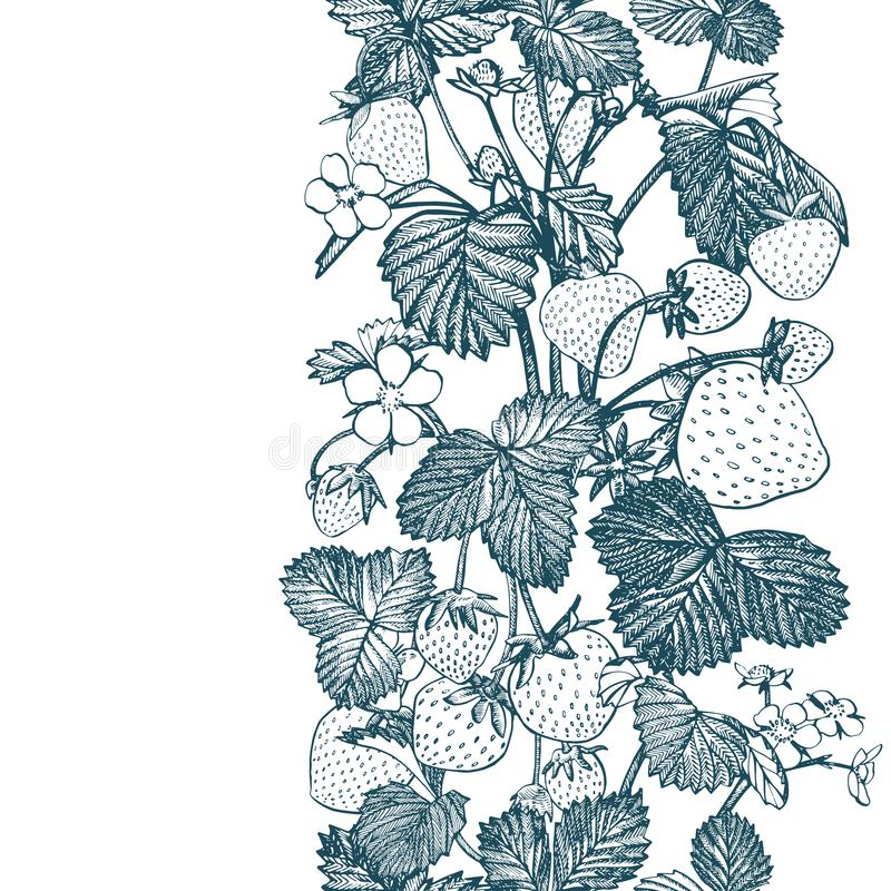 Strawberry seamless pattern. Isolated hand drawn illustration on white background. Organic healthy food. stock illustration