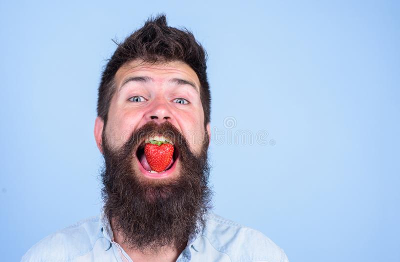Strawberry sweet taste concept. Man handsome hipster with long beard eating strawberry. Man enjoy berry taste. Berry in royalty free stock photo