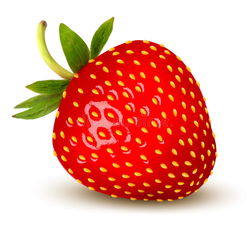 Free Strawberry. Vector. Stock Photography - 32917572