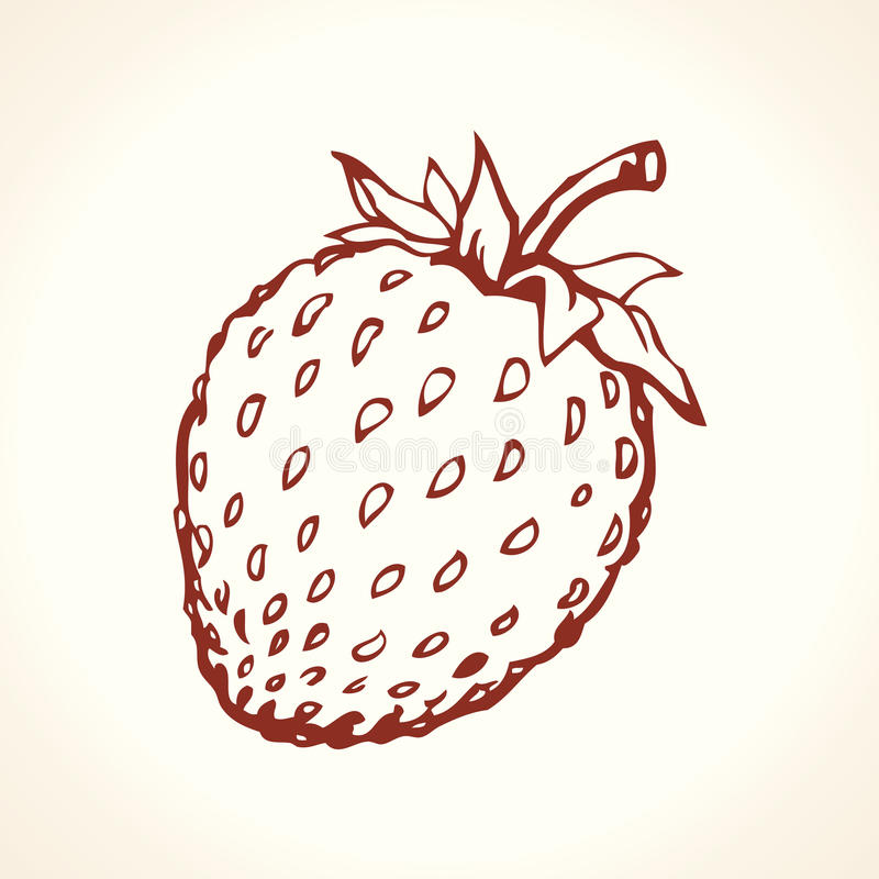 Strawberry. Vector drawing stock vector. Image of contour ...