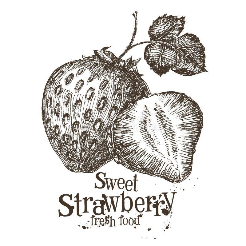 Strawberry vector logo design template. fresh royalty free illustration