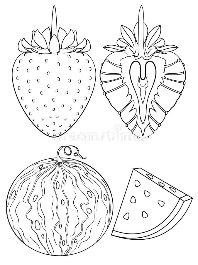strawberry watermelon coloring page outline