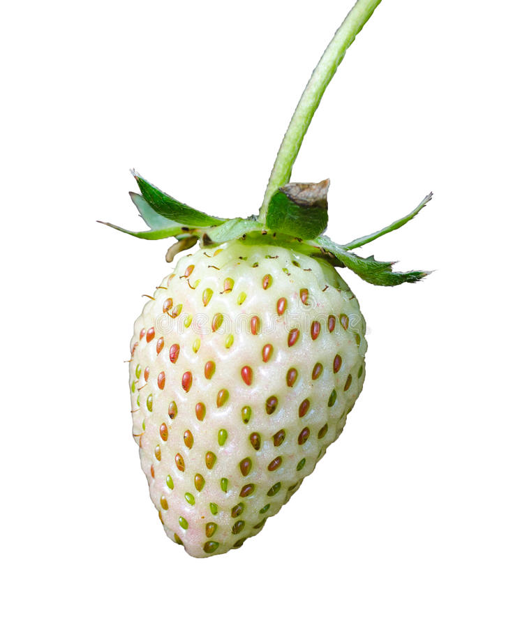 Strawberry on a white background. Raw strawberry on a white background stock photos