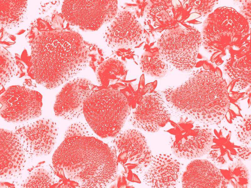Strawberry on white or light pink background, abstract pattern royalty free stock photo