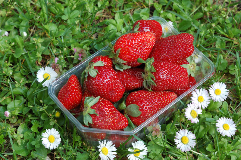 Strawberryes fotografie stock