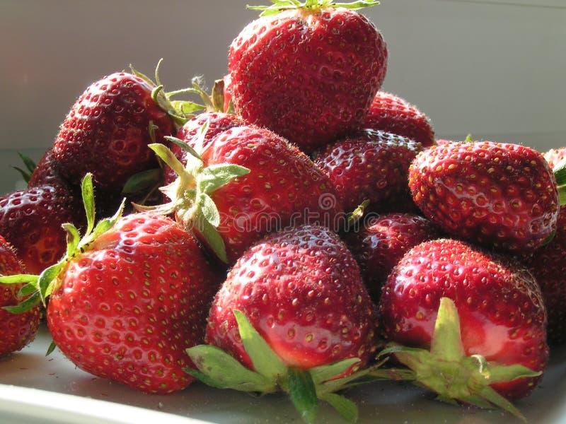 Strawberrys fotografie stock libere da diritti