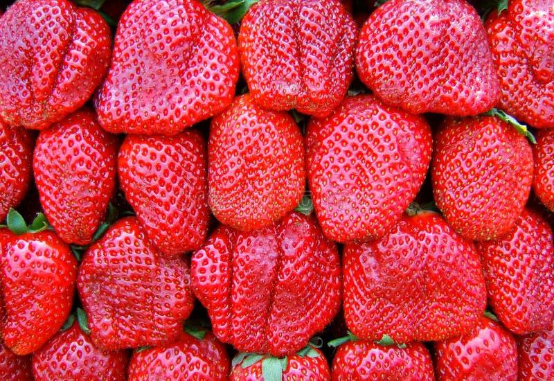 Strawberrys fotografia stock libera da diritti