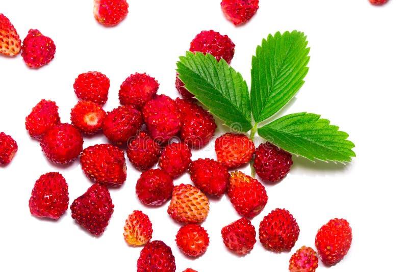 Strawberrys selvaggi con le foglie Isolato su una priorità bassa bianca immagine stock libera da diritti