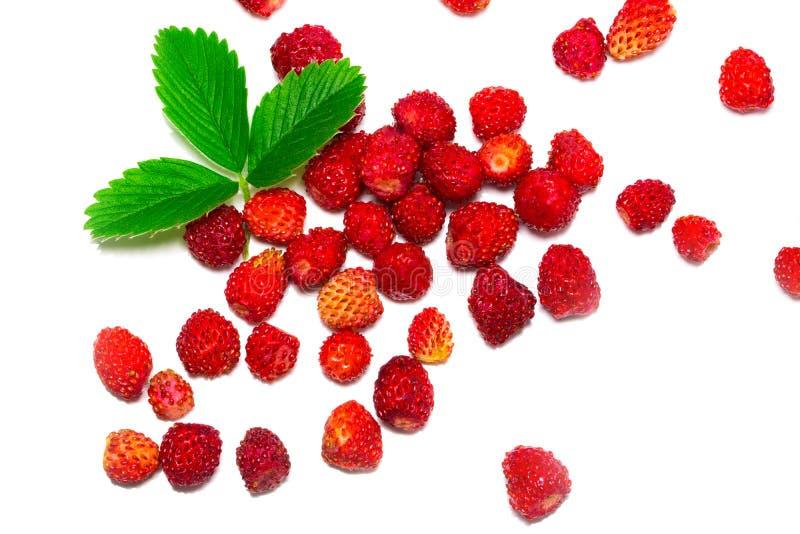 Strawberrys selvaggi con le foglie Isolato su una priorità bassa bianca immagini stock libere da diritti