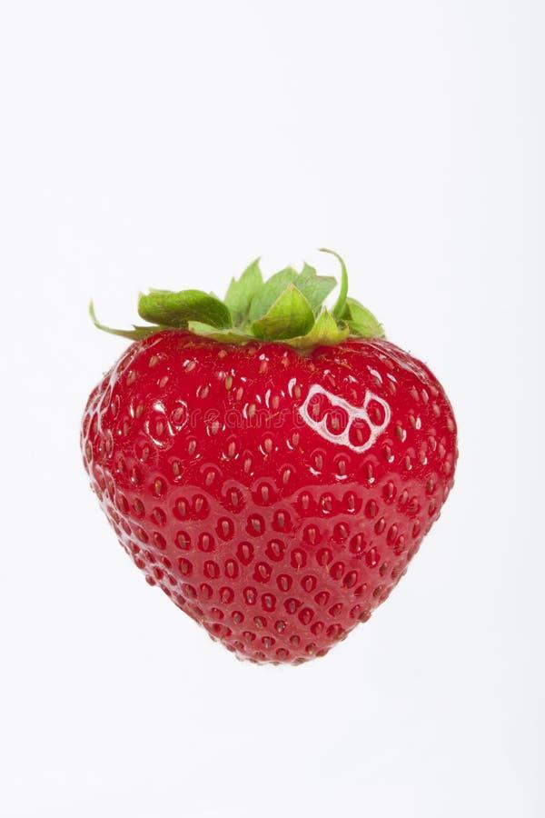 Strawbery fresco su fondo bianco immagine stock libera da diritti