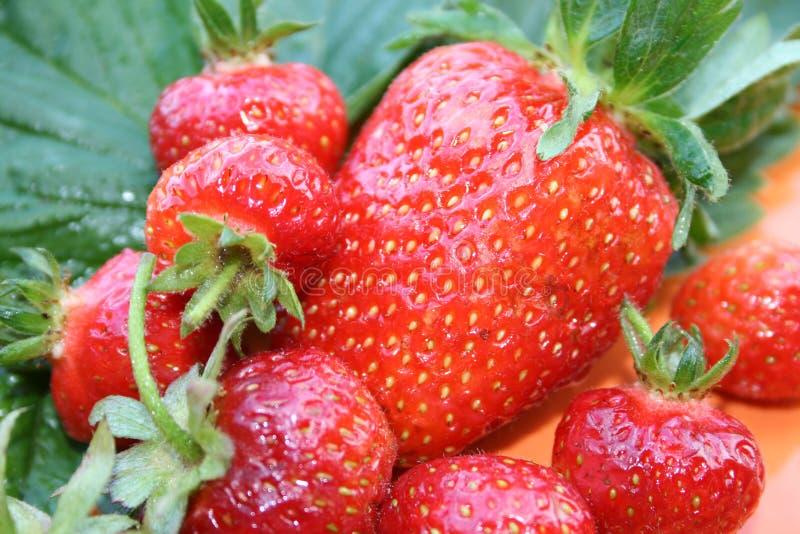 Strawberyy stock photos