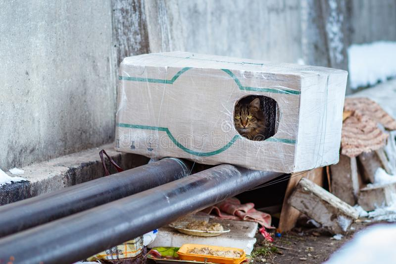 Stray animals in winter, homeless cat sitting on a heating main, homeless frozen cat warms on pipes, people making a house out of. A box for a homeless cat stock image