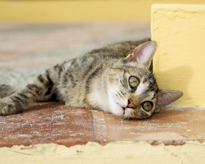 Download Stray cat stock photo. Image of stray, ground, cute, wiskers - 13592754