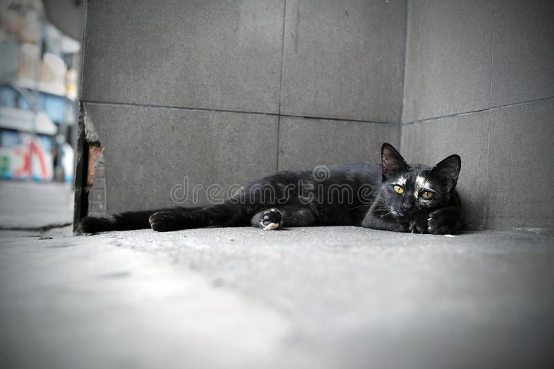 Download Stray Cat stock image. Image of front, homeless, dirty - 27630425
