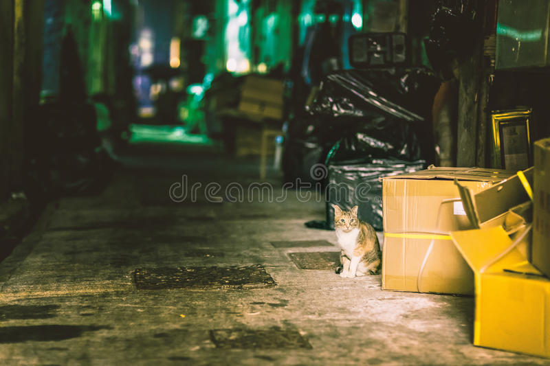 Stray cat in alley stock photos