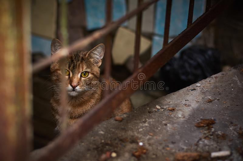 Stray cat behind a rusty old fence. A stray brown cat behind a rusty old fence. Lonely cat in the city royalty free stock photography