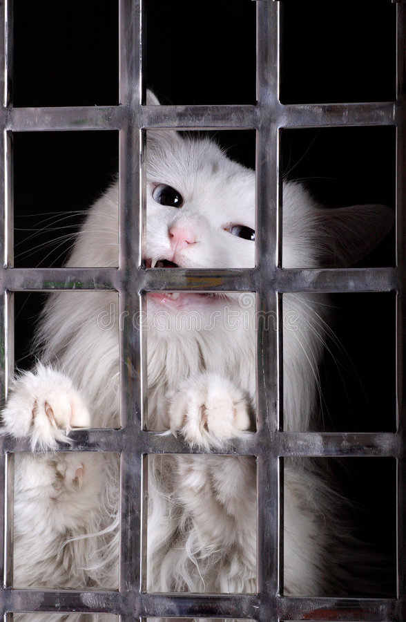 Stray cat in cages. Stray cat in the iron cages. Now, it has already been adopted by a deliverer stock photography