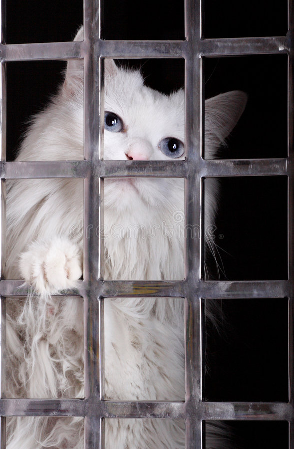 Stray cat in cages. Stray cat in the iron cages. Now, it has already been adopted by a deliverer royalty free stock images