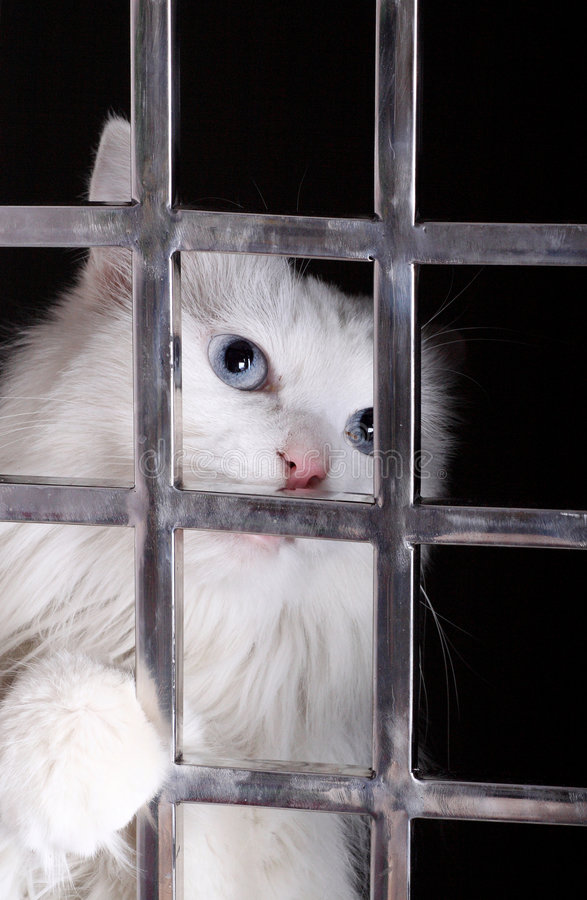 Stray cat in cages. Stray cat in the iron cages. Now, it has already been adopted by a deliverer stock photo