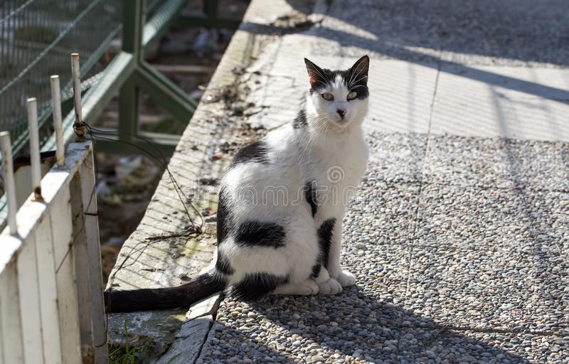 The stray cat. Derelict, forlorn, alone cat outdoor.  stock images
