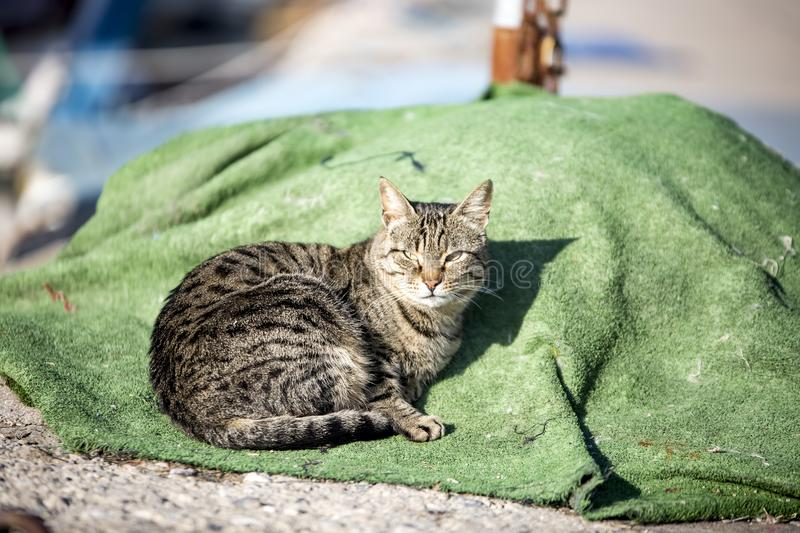 The stray cat. Derelict, forlorn, alone cat outdoor.  stock photography