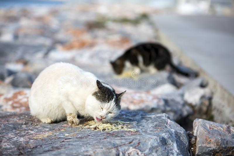 The stray cat. Derelict, forlorn, alone cat outdoor.  stock photos